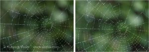two spider web pictures for different ISO values.