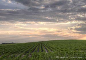 Green farmland in the sunset